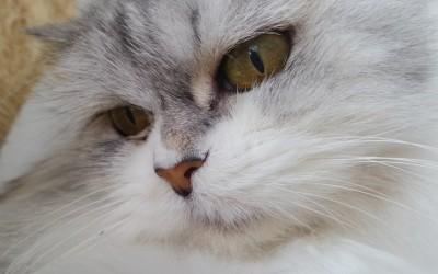 kotek, Szkoła Szydełkowania